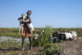 Pasáček koz u Aleje baobabů