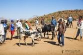 Ambalavao - na dobytčím trhu