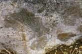 Tsingy de Bemaraha - zkameněliny
