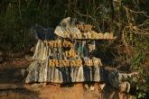 Tsingy de Bemaraha - vstup do části Petit Tsingy