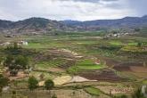 Rýžová pole u vesnice Betafo