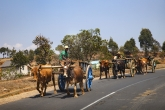 Cesta do Miandrivazo