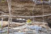 Hroby kmene Vazimba (řeka Manambolo)
