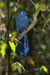 Rezervace Analamazaotra (národní park Andasibe-Mantadia)