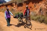 Vesničani vezou na kole prase na trh do Ambalavao