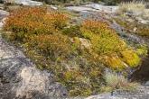 Rostliny v parku Andringitra