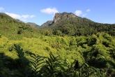 Národní park Marojejy