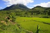 Rýžoviště na úpatí národního parku Marojejy