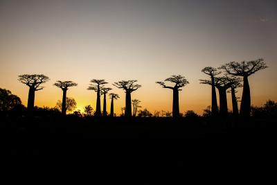 Alej baobabů