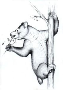 Megaladapis