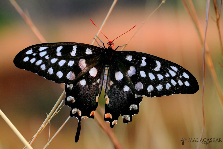 Hmyz a bezobratlí