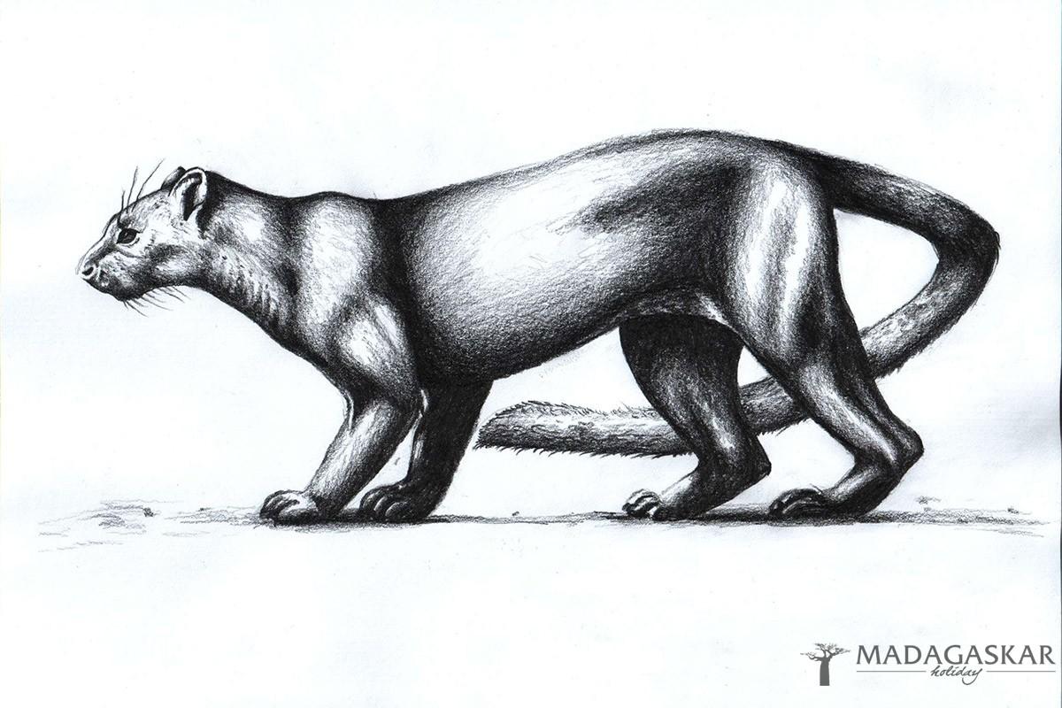 Vyhynulá zvířata