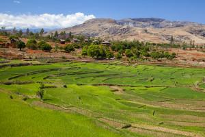 Rýžové pole u RN7 - centrální Madagaskar